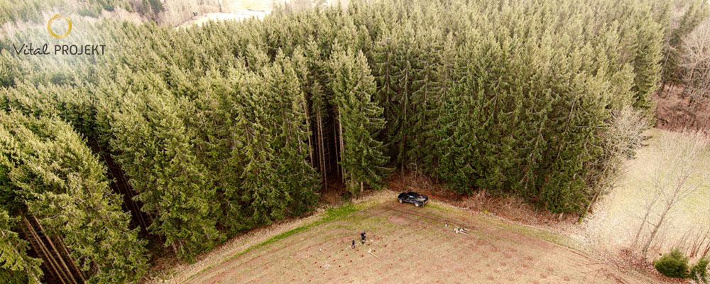 Der Wald und seine Auswirkung auf unsere Gesundheit