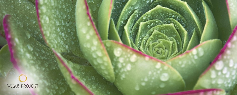Geomantische Gartengestaltungen für mehr Lebenskraft